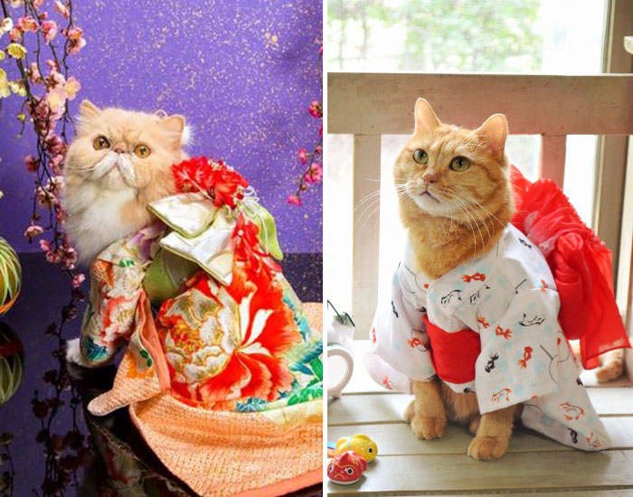 Cats In Kimonos Are A Thing In Japan