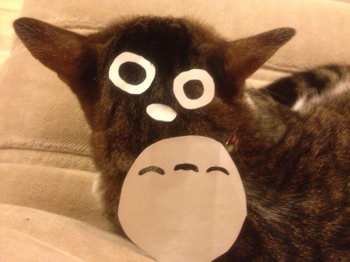 Totoro Cat