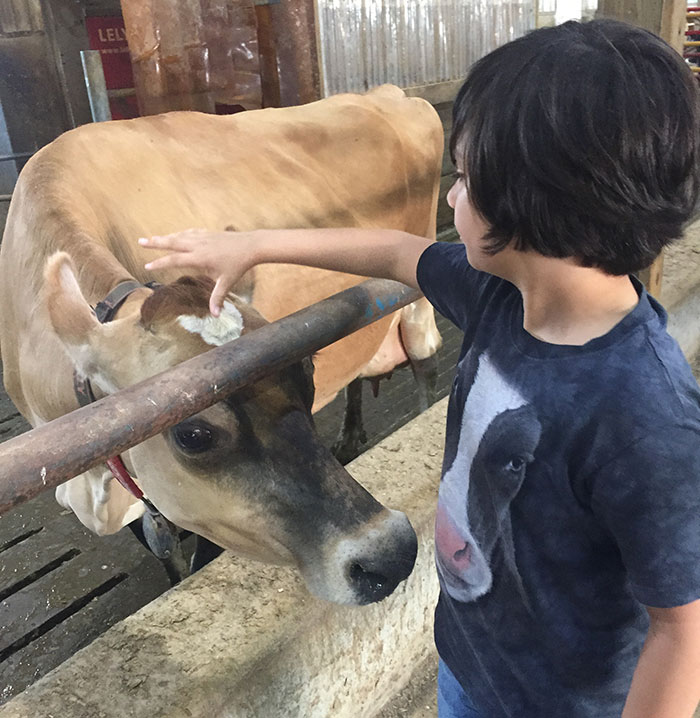 Cow Amoosed By My Son's Cow Shirt