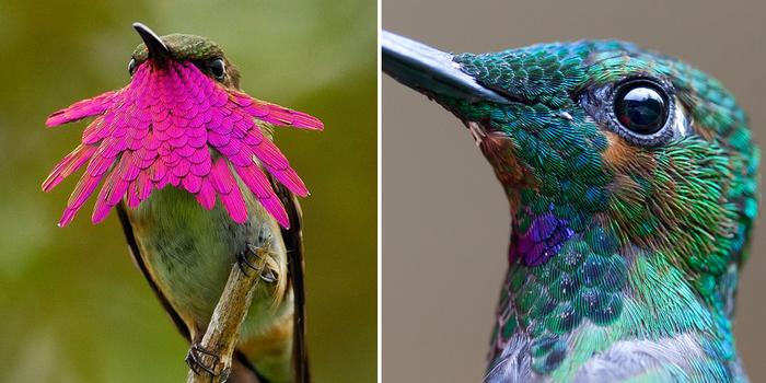 Plantas que atraen a los colibríes | Almanaque del Viejo Agricultor