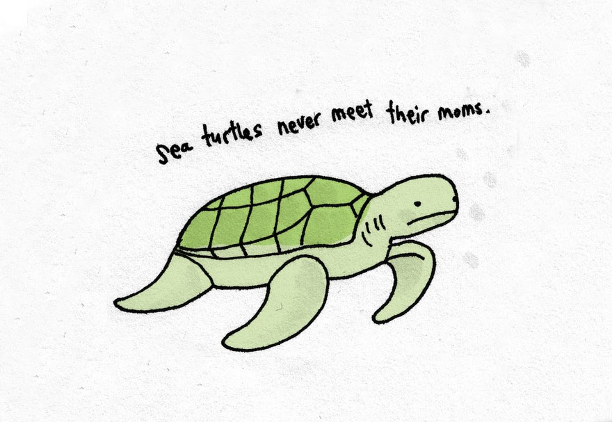 Sad Animal Facts Are The Cutest Way To Ruin Your Day ...