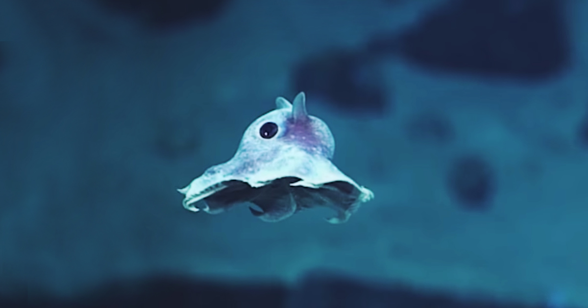 Strange never before seen sea creatures discovered 20000 feet strange never before seen sea creatures discovered 20000 feet under the sea bored panda sciox Choice Image