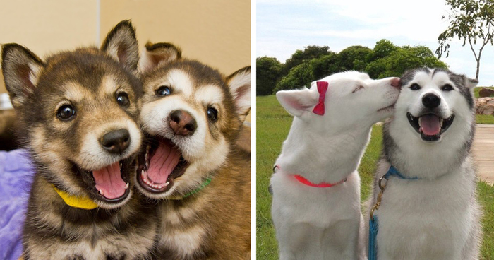232 Dog Best Friends That Can't Be Separated | Bored Panda