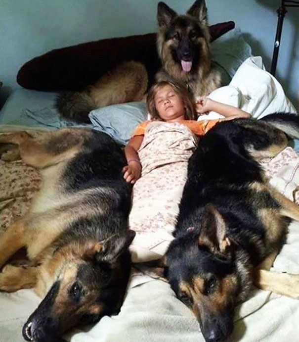 Girl And Her Dogs