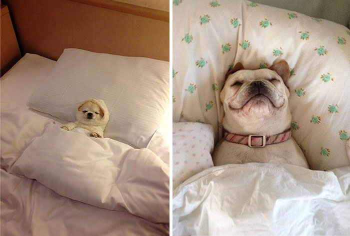224 Sleepy Dogs Who're Definitely Not Letting You Sleep In Your Bed Tonight