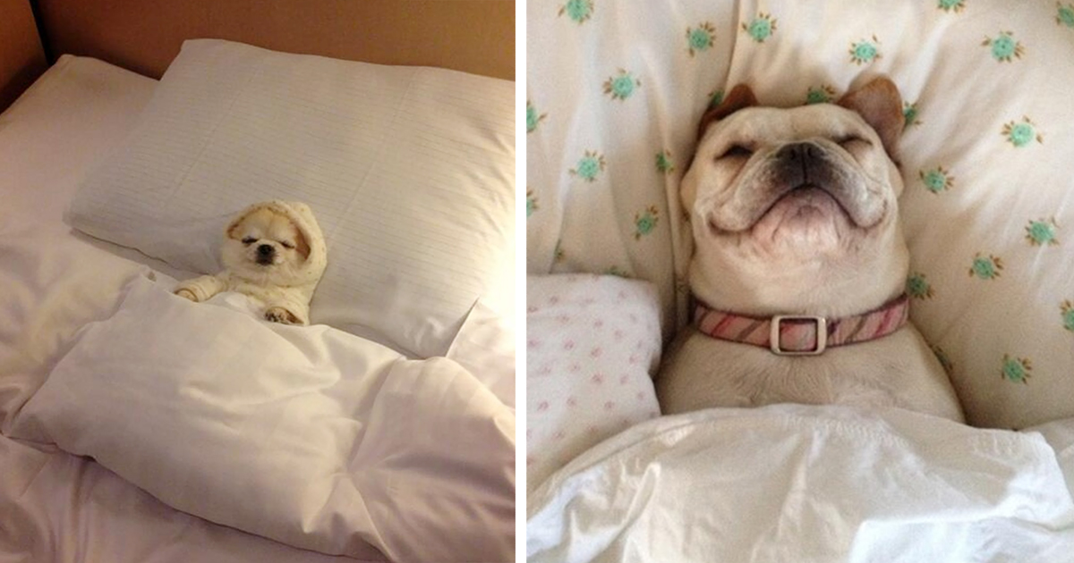 20+ Sleepy Dogs Who're Definitely Not Letting You Sleep In Your Bed Tonight