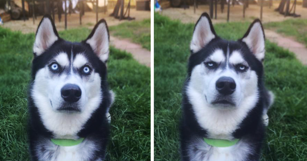 Owner Pretends To Throw Ball And Captures The Exact Moment Dog Realizes He Was Betrayed