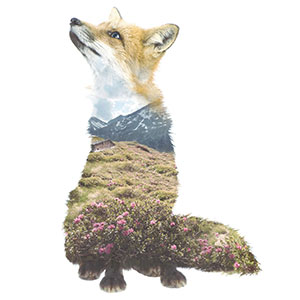 We Take Double-Exposure Animal Portraits To Escape The Daily Routine