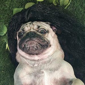 Pug Recreates Sexiest Kim Kardashian Selfies, Internet Can't Tell Who's Who