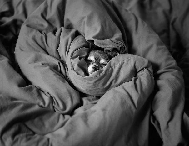 My Tiny Doggie, Warm And Cozy