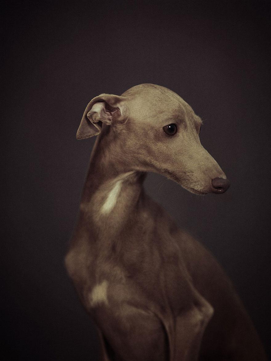 expressive-animal-portraits-human-emotions-vincent-legrange-1