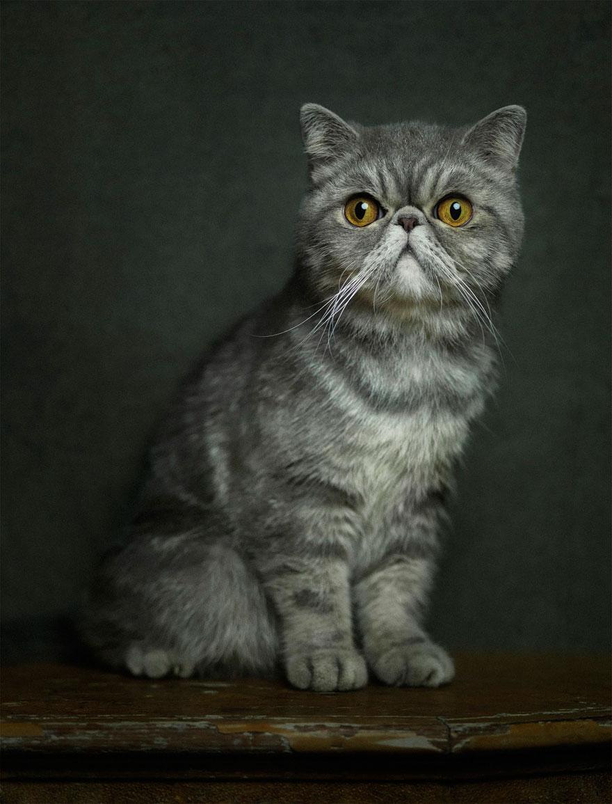 expressive-animal-portraits-human-emotions-vincent-legrange-12