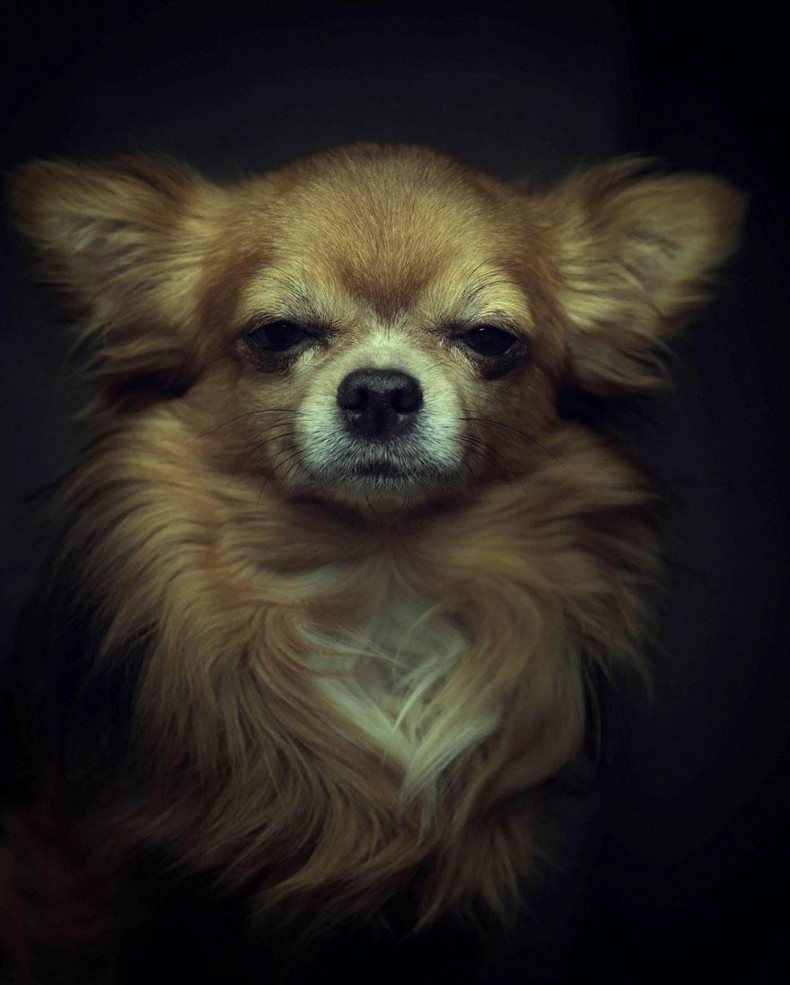 expressive-animal-portraits-human-emotions-vincent-legrange-6