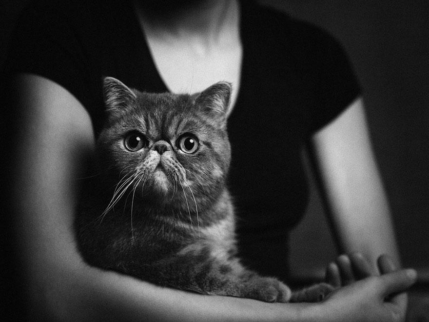 expressive-animal-portraits-human-emotions-vincent-legrange-8