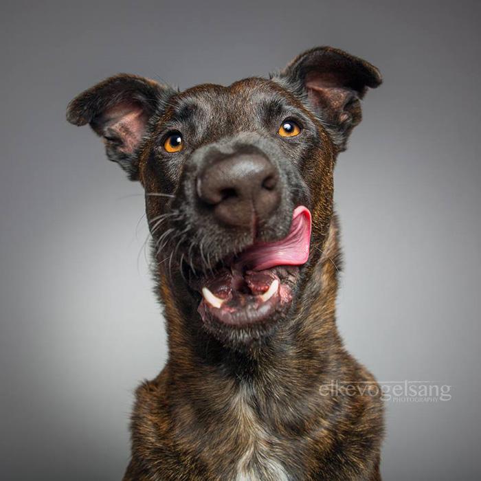 expressive-dog-portraits-elke-vogelsang-11