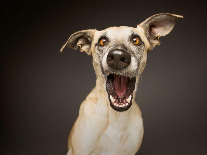 expressive-dog-portraits-elke-vogelsang-14