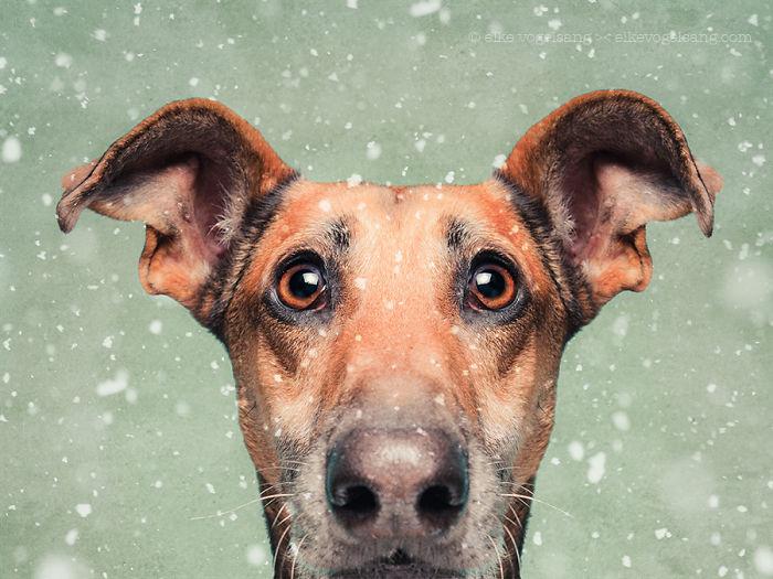expressive-dog-portraits-elke-vogelsang-16