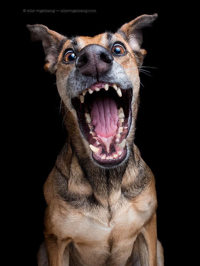 expressive-dog-portraits-elke-vogelsang-3