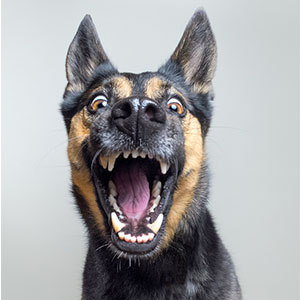 New Expressive Dog Portraits By Elke Vogelsang