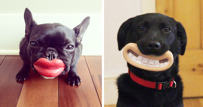 Dog Chew Toy For Cats