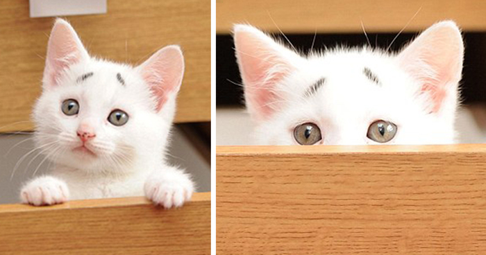 how to look after a kitten from 8 weeks old