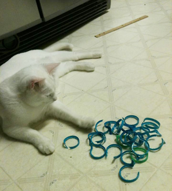 Sctivation Toys For Cats