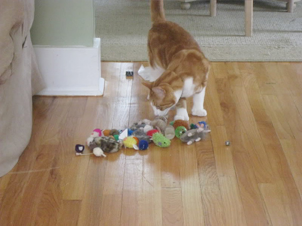 Last Week I Learned That Our Cat Was Stashing His Toys Under The Old Couch In The Living Room