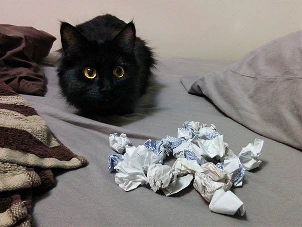 So Our Kitten Has Been Hoarding Balled-Up Receipts Behind The Bed And I Found Her Stash