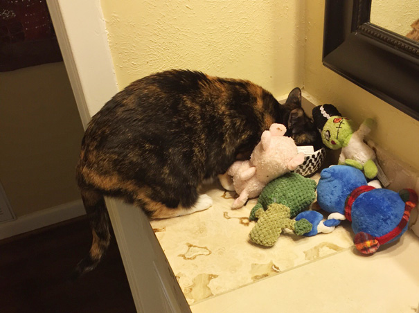 My Cat Steals My Dogs Toys And Surrounds Her Food Bowl With Them