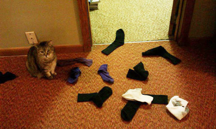We Were Gone For A Week And Our Sock-delivering Cat Missed Us
