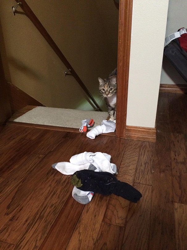 My Cat Brings Me Socks Whenever I Don't Pay Attention To Her To Try To Win My Approval