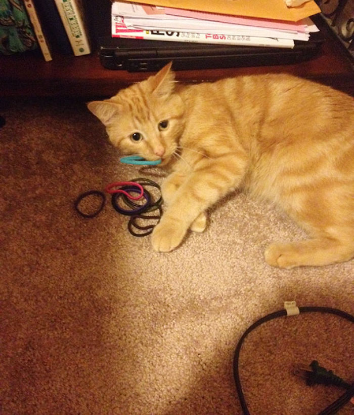 I Found My Cat's Stash