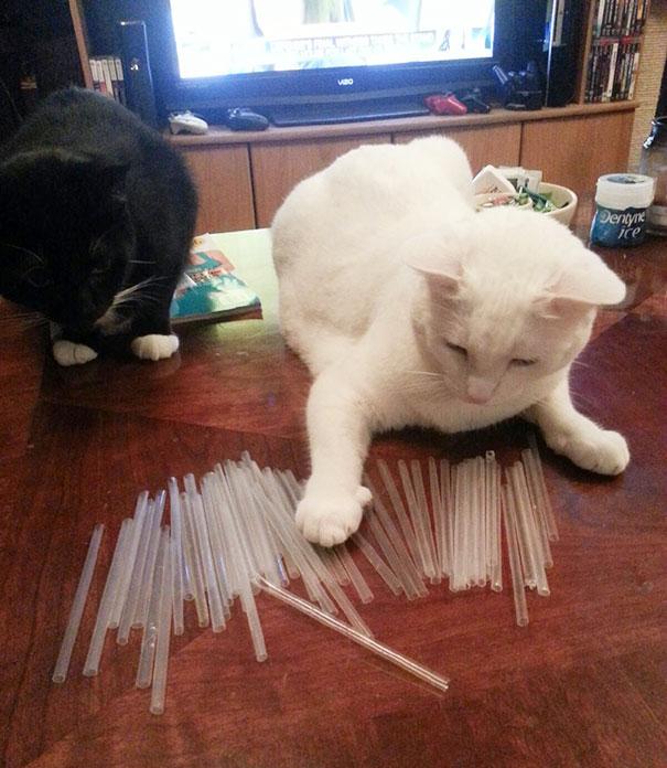 Hoarder Cat