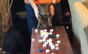 18+ Hoarder Cats Who Don't Realize That They Have Problems