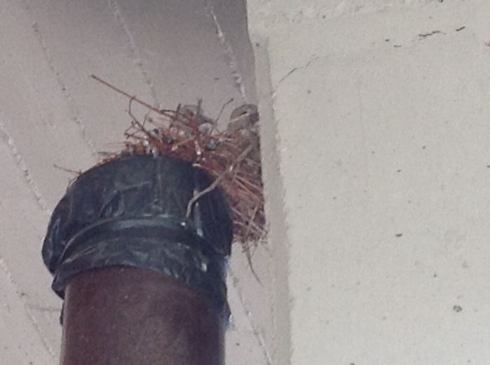 Turtledoves On Top Of Unused Stove Pipe