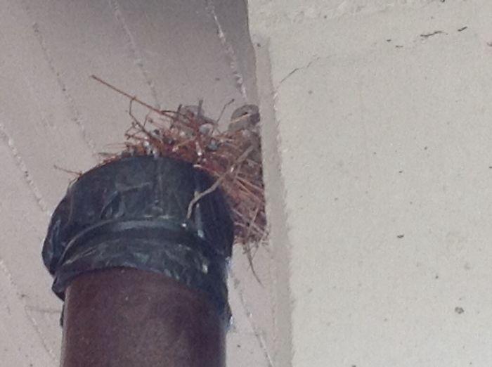 Turtledoves On Top Of Unused Stove Pipe