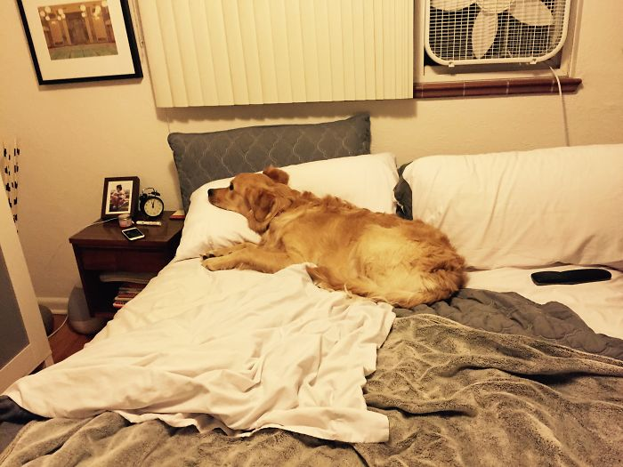 Dog In Bed…