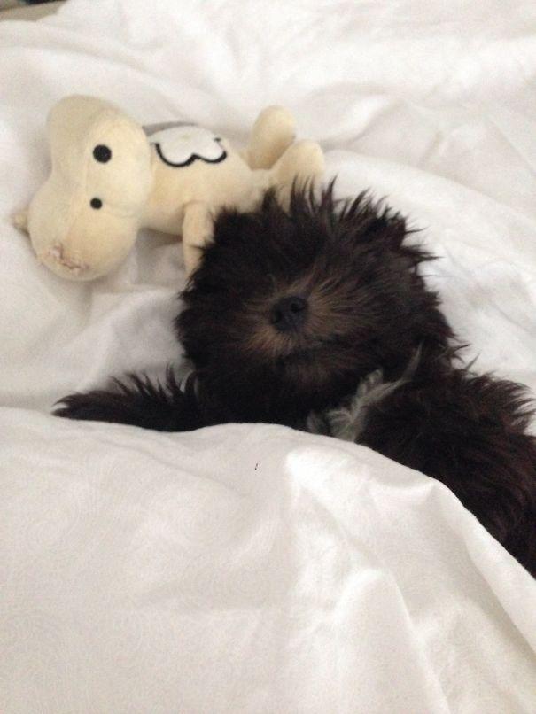 Sleepy Little Elvis In Bed