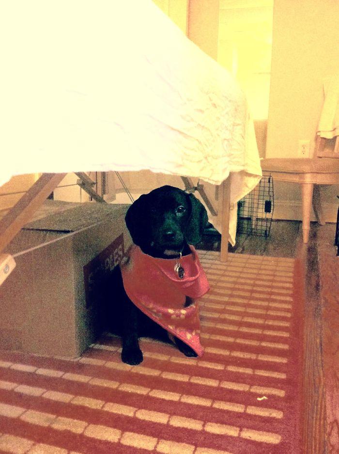 Gypsy Awaits The Next Massage Client