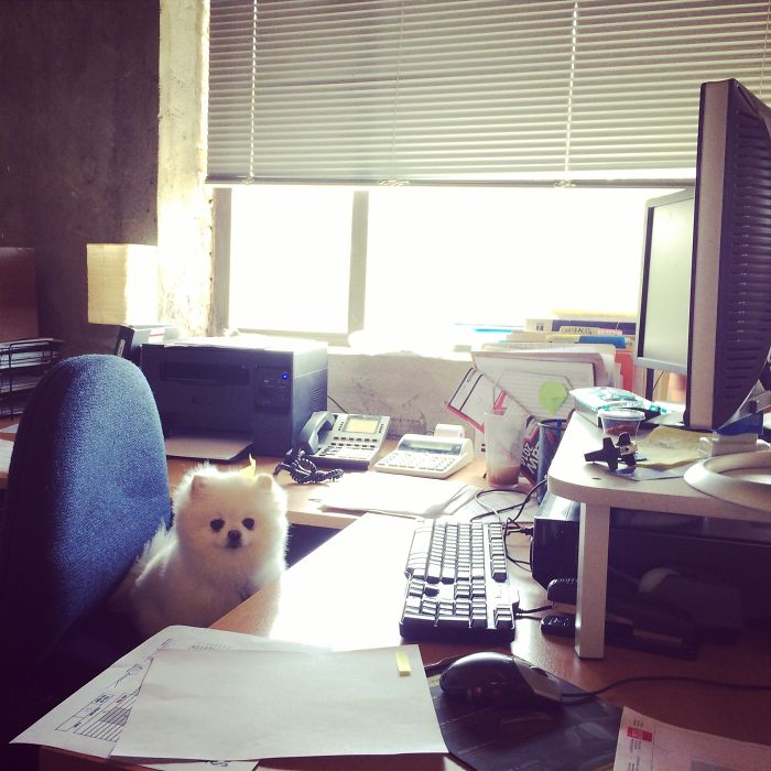 We Have A New Office Intern