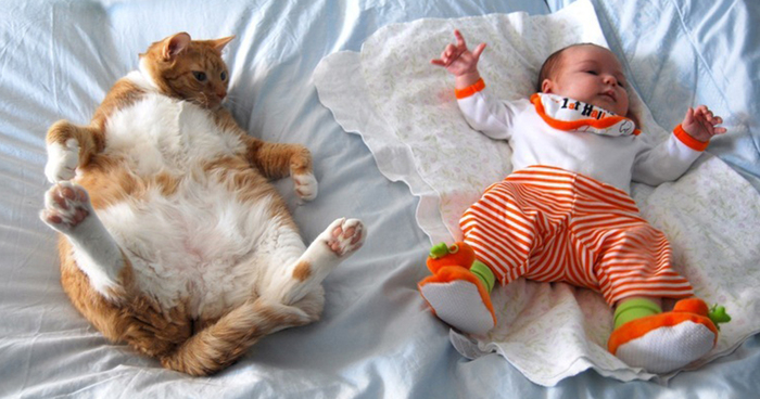 20+ Adorable Photos Proving That Your Kids Need A Cat ...