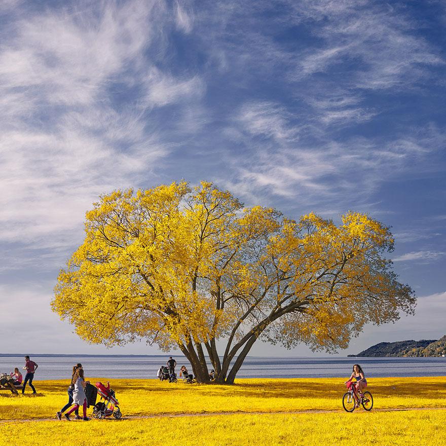 nature-photography-solitary-broccoli-tree-patrik-svedberg-sweden