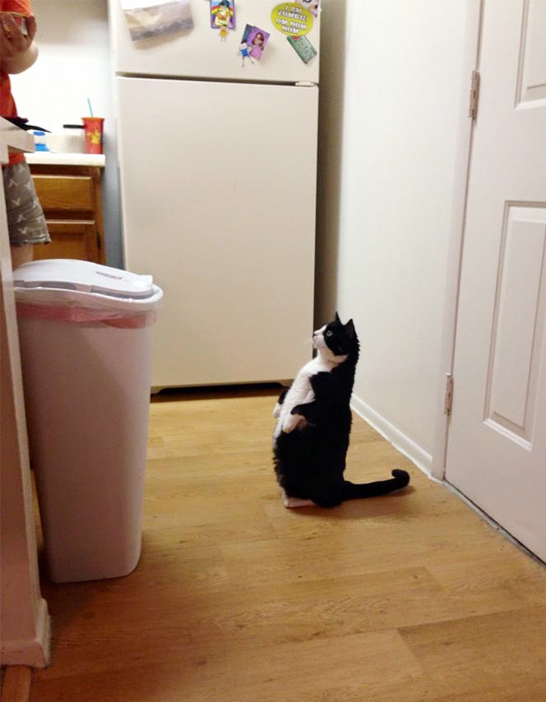 A Friend Of Mine Just Adopted This 6-Year-Old Cat, And This Is How She Waits For Her Food