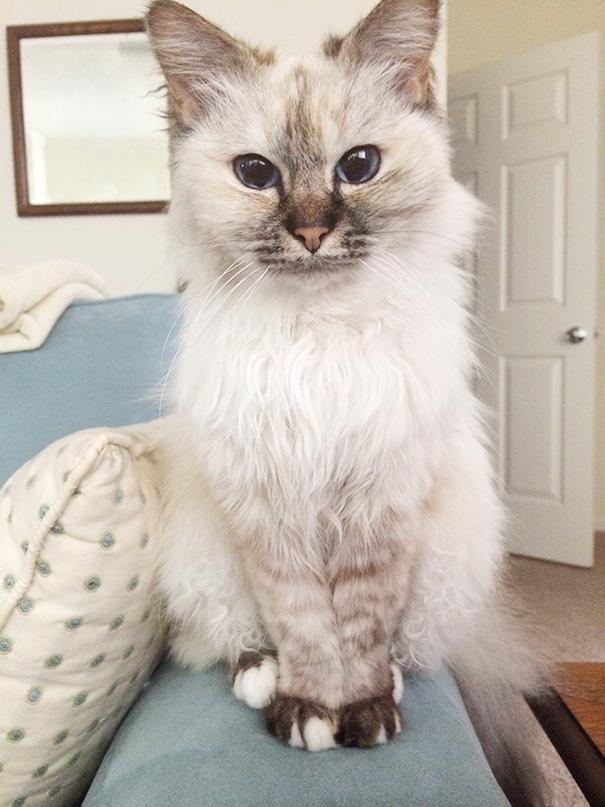 sphynx cat price range
