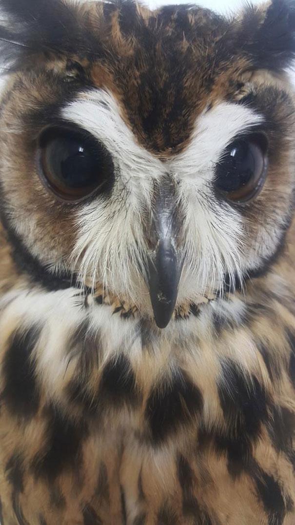 owl-cafe-ikefukuroucafe-tokyo-1