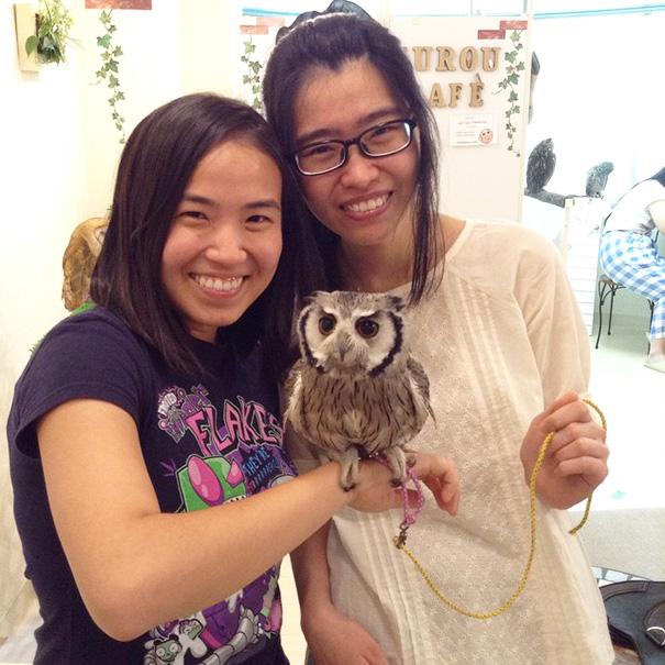owl-cafe-ikefukuroucafe-tokyo-12