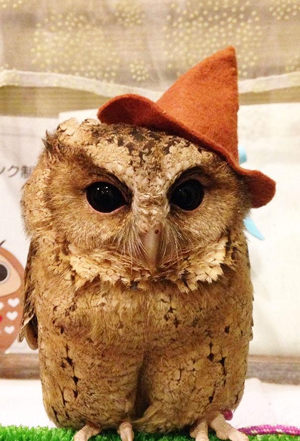 owl-cafe-ikefukuroucafe-tokyo-15