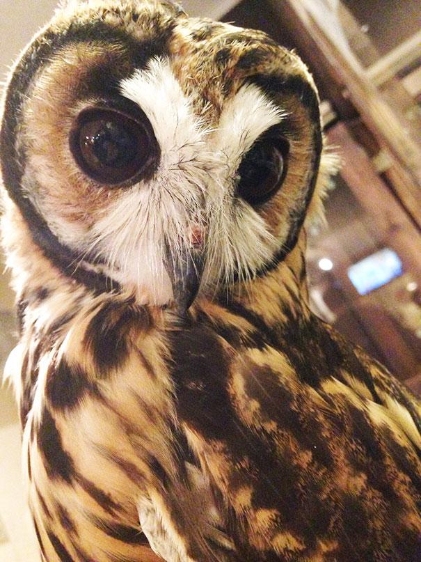 owl-cafe-ikefukuroucafe-tokyo-17