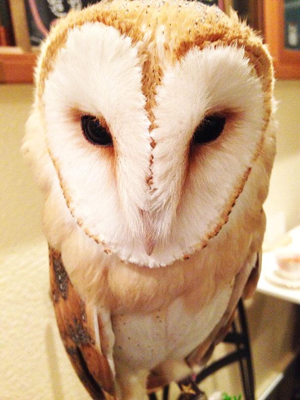 owl-cafe-ikefukuroucafe-tokyo-19