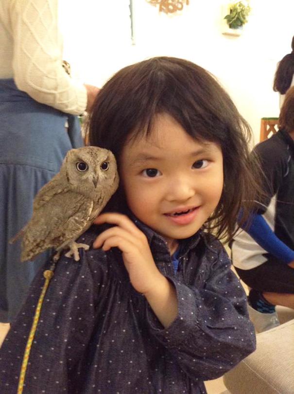 owl-cafe-ikefukuroucafe-tokyo-2